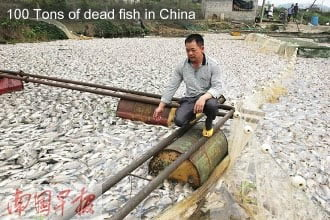 100 Tons Dead Fish in China