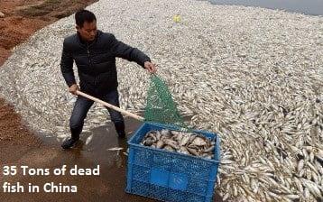 35 tons Dead Fish
