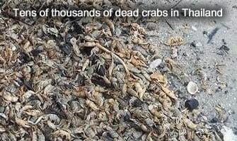 Dead Crabs in Thailand