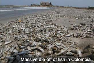 Dead Fish in Colombia