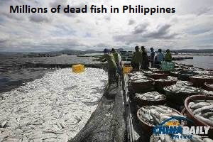Dead Fish Philippines