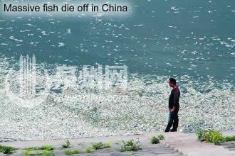 Dead fish in China