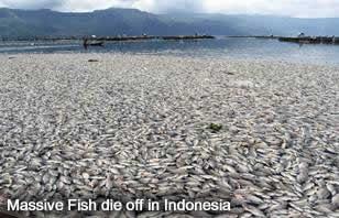Fish Die off Indonesia