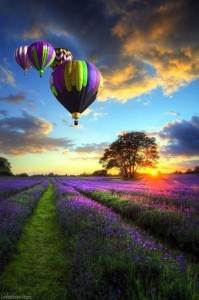 14461-Hot-Air-Balloons-Over-Lavender-Field