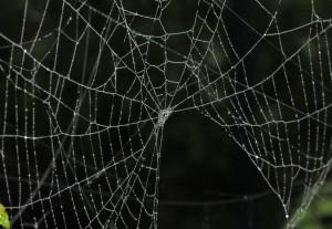 spider-web-8