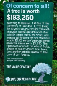 tree is worth