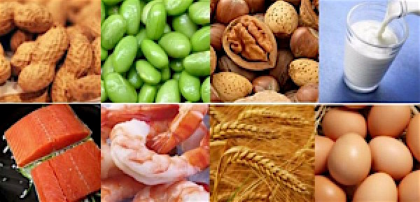 Ninety percent of people with food allergies in the United States are allergic to one of these top 8 foods: wheat, eggs, milk (all dairy), shellfish, fish, soy, peanuts and tree nuts.