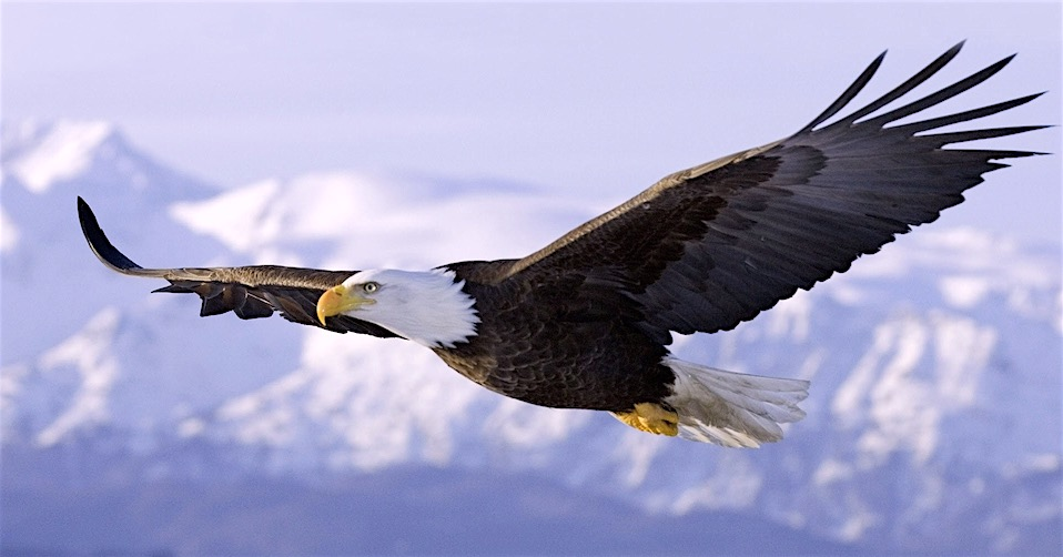 eagleinflight