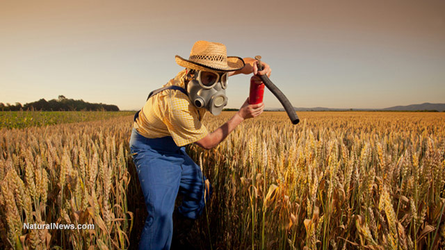 Farmer-Gas-Mask-Insecticide-Pesticide-Wheat-Field-Crops-Funny