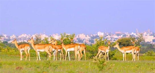Photo: Aditya Khirsagar.