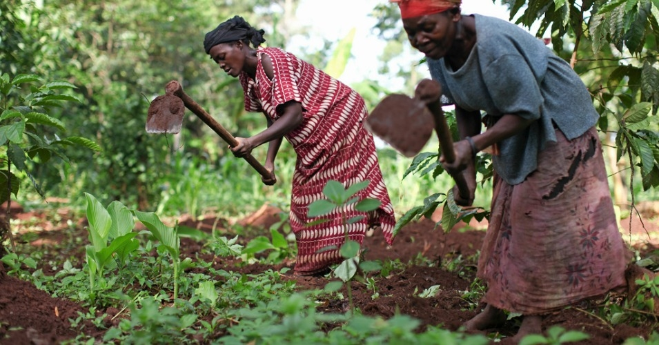 ugandafarmer