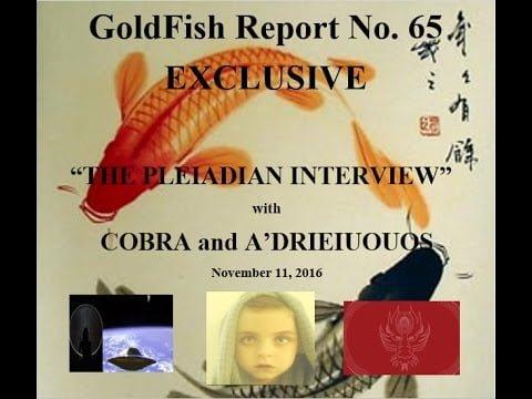 relatório goldfish 65 entrevista pleidiana com cobra e a'drieiuoios