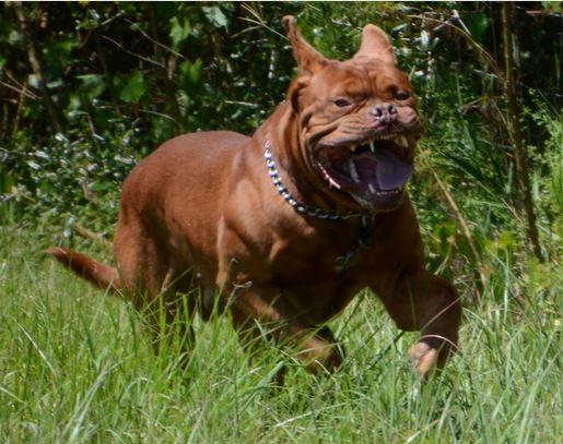 Emery Smith dog Beowulf