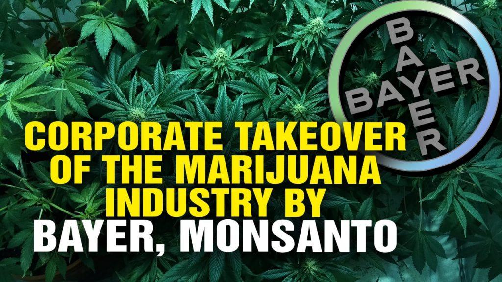 Image result for monsanto marijuana