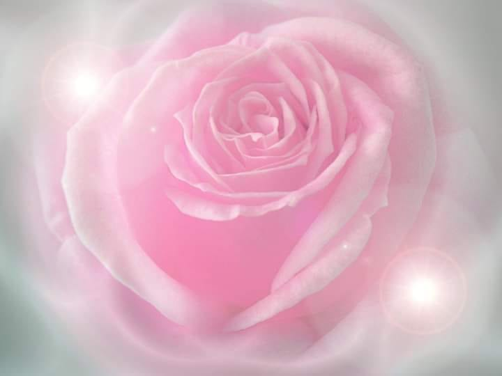 Pretty Pink Rose Graphic