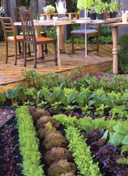 Urban Gardening: Grow Amazing Food In A Limited Space