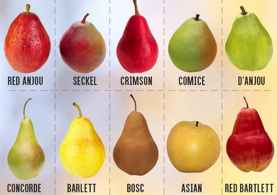 Many pears of different colors