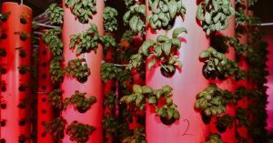 Why Aeroponic Farming Is the Agricultural Wave of the Future